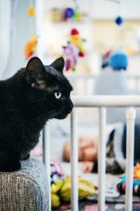 Katze und Baby gefährlich?