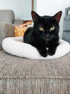 Katze auf einem Kuschelkissen