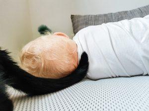 Katze und Baby kuscheln